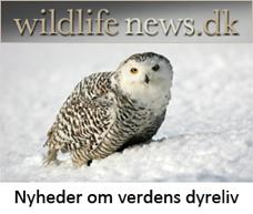 wildlifenews.dk